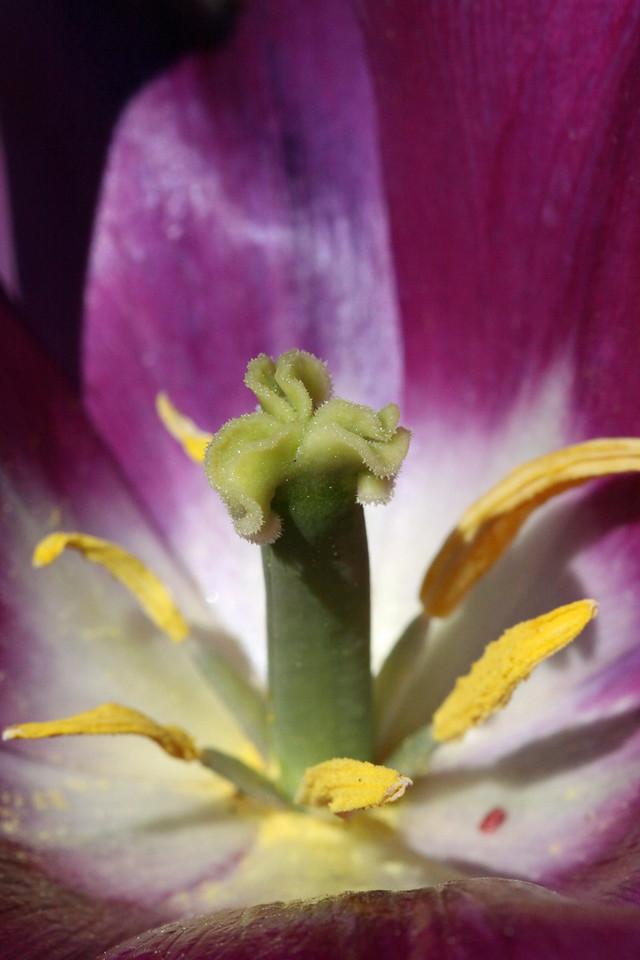 Inside the bloom