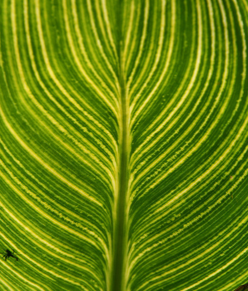 Nature's pattern