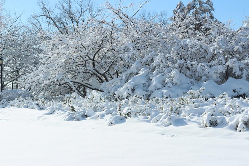A wintery landscape on a sunny day.