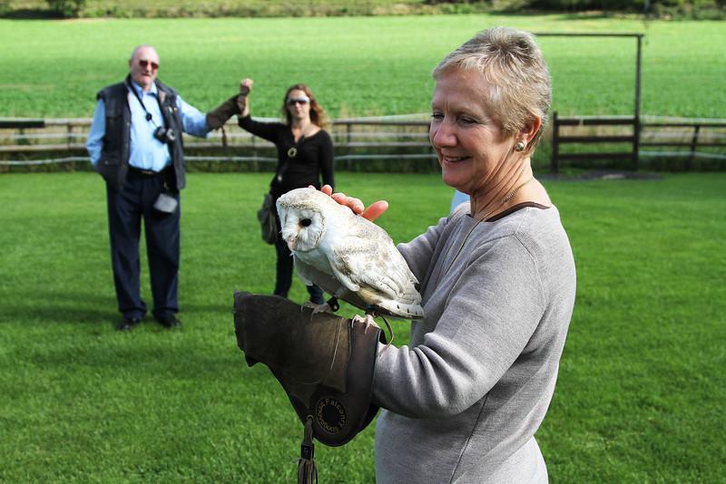 Peace, a female Barn Owl, born 2006.