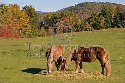 P20071013 058 NH Horses UnkLocation