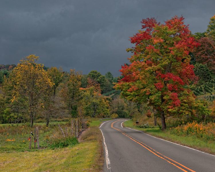 Tree in Sturgills, NC