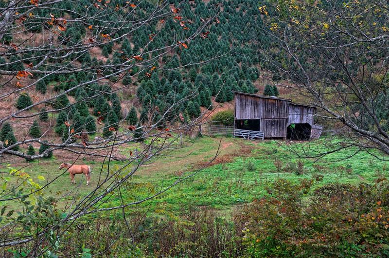 Barn on Hwy 194 near Lansing, NC