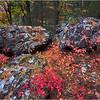 Stony Brook Reservation. Hyde Park. November 1, 2015.