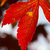 """""""Autumn is a second spring when every leaf is a flower."""" ~Albert Camus"""