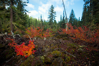 Fall Colors mid October in Oregon