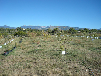 Purchasing local heritage trees at Tooley's Trees, Truchas, NM