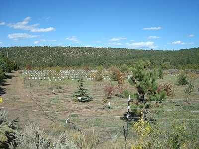 Purchasing local heritage trees at Tooley's Trees, Truchas New Mexico