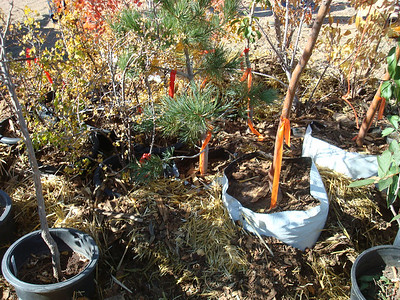 Blessing of the trees to be planted:  Pines, Locusts, Maples, Apricot, Wild Plums, Pear, Apple, Crab Apples, Sumac, Currants
