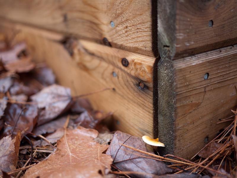 Mushrooms like poop