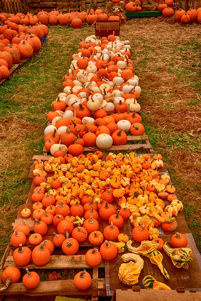 Pumpkin Sale in downtown Black Mountain
