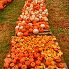 Pumpkin Sale in downtown Black Mountain