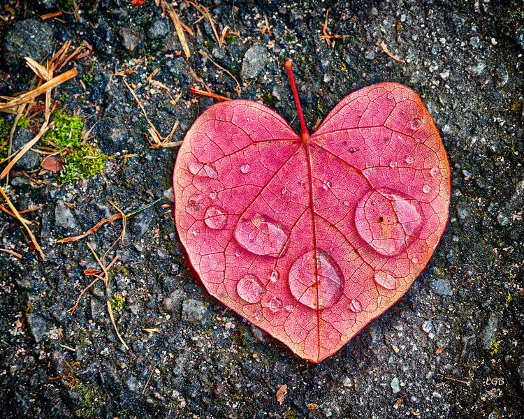 Onto every heart, some rain must fall