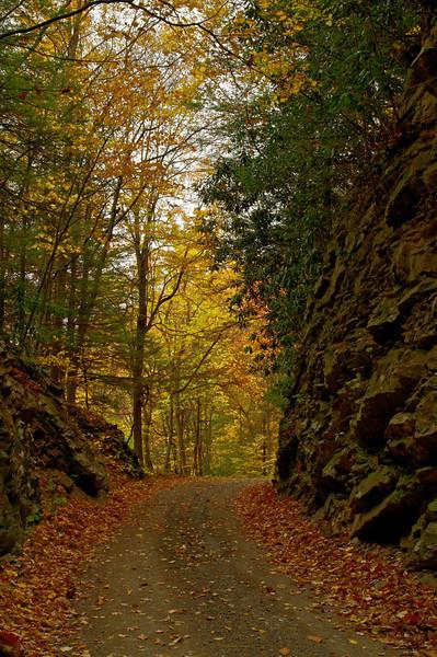 Grassy Ridge Road