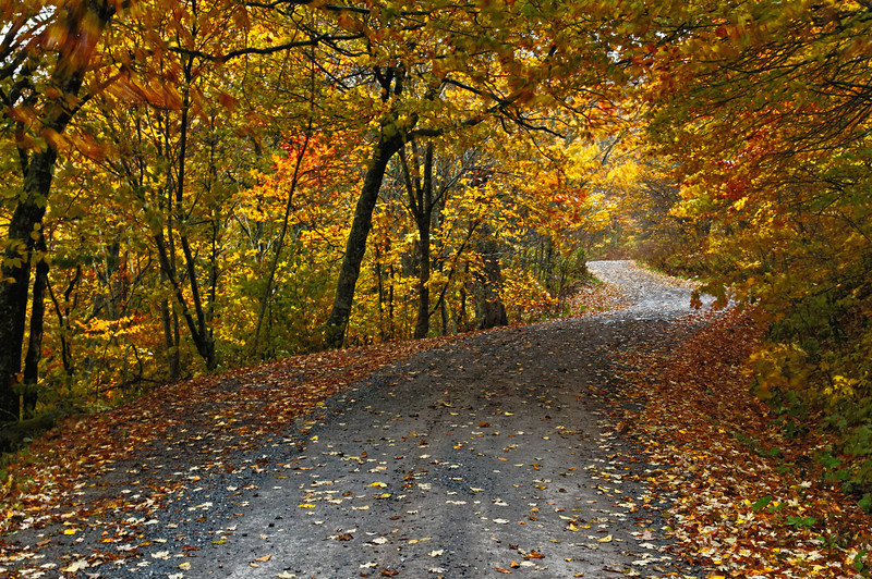White Top Mtn - Fall Road