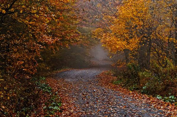 Fall on Virginia Highway 58