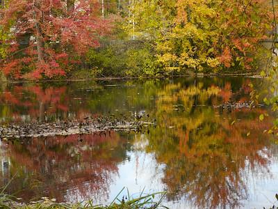 Fall scenery 2013