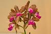 orchids-6986