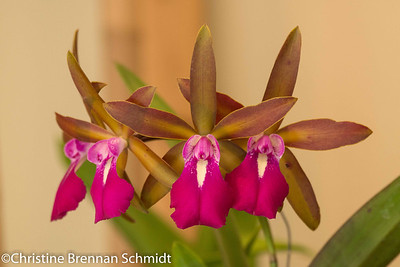 orchids-6982
