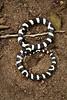 Snake8-2773