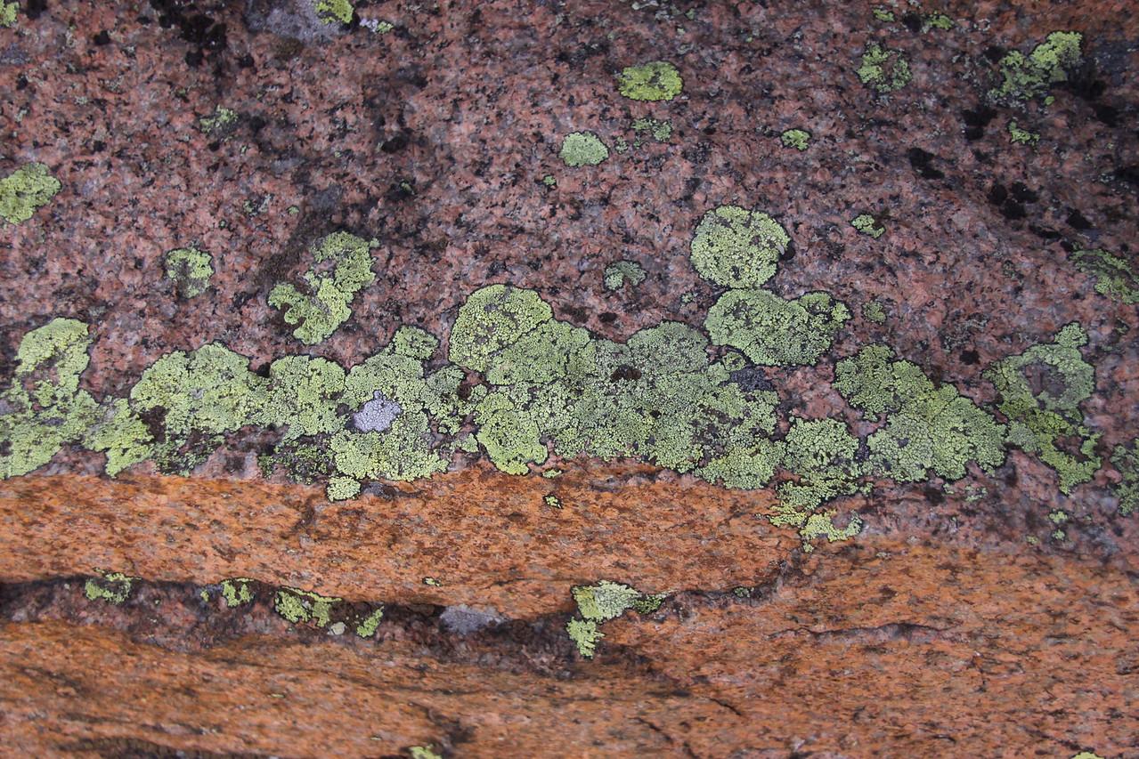 Lichen on Cadillac Mountain.
