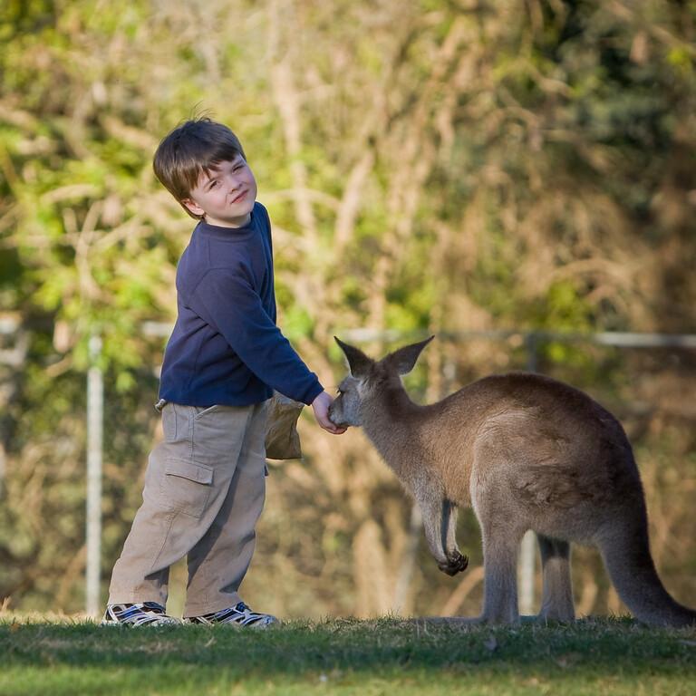 Alexander feeding a Kangaroo