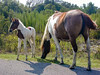 01_0814_Chincoteague_0213