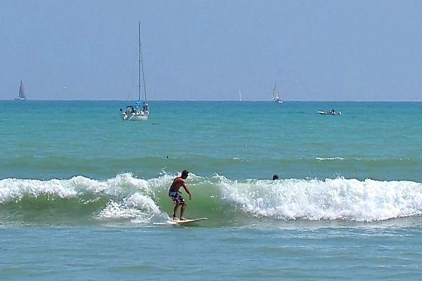 Surfing Dork