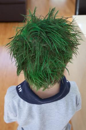 wacky hair day