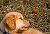 Dog & Butterfly 1