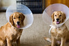 Puppy Coneheads 1