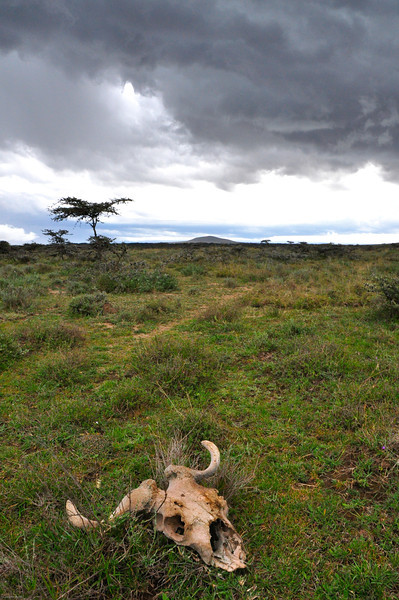 Afternoon storm clouds gather over the Loita Plains. Kenya.