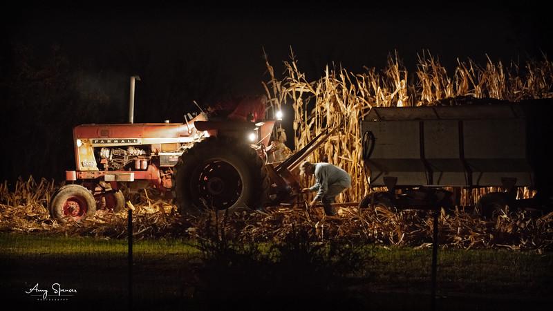 Picking corn after dark