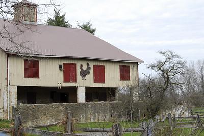 Chicken on the Barn