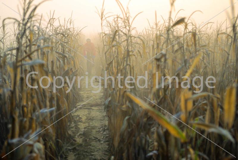 Mountain biker in Kentucky cornfield near banks of Kentucky River - 72 ppi