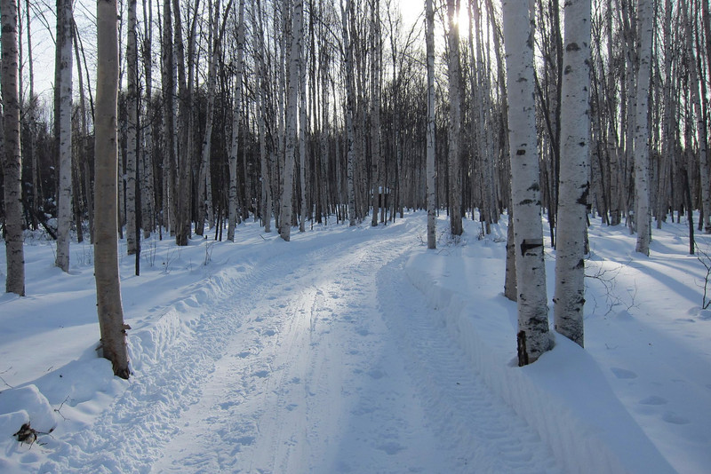 The river trail through the birch forest