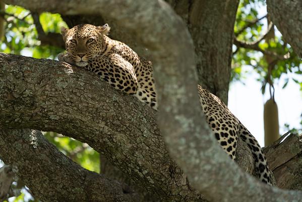 Serengeti_01-28-2019_118