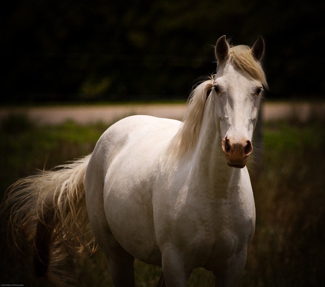 Horse in Heath, Alabama