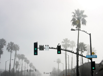 Birds Blocking Santa Monica, CA