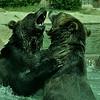 rasslin grizlies, Memphis Zoo