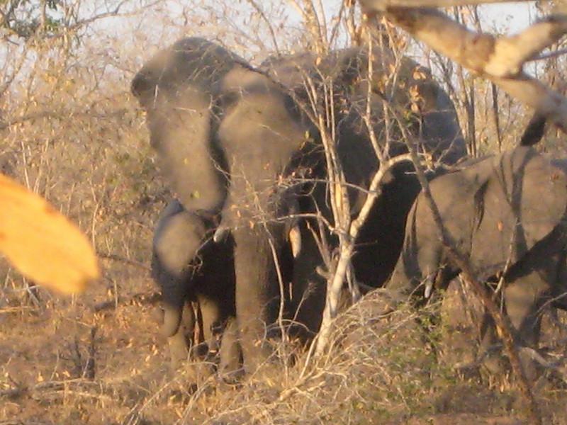 Laurie's Elephants