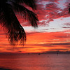 Sunrise in Key West with Palm Trees