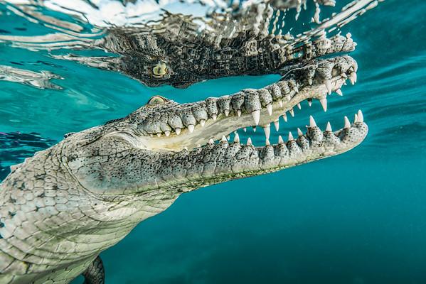 Reflecting on Crocodiles
