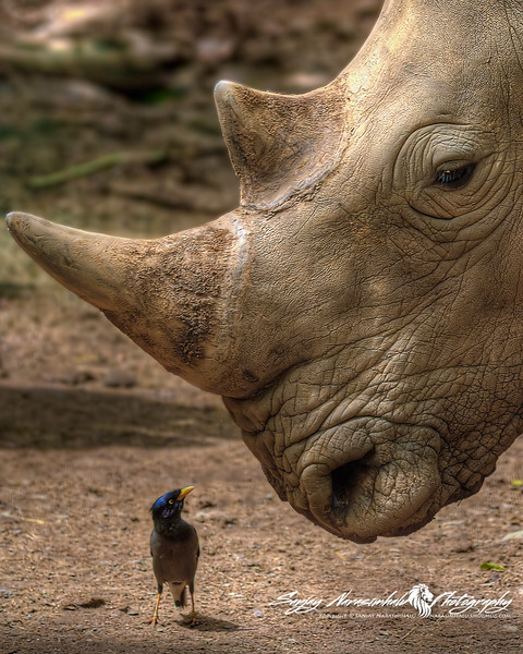 """Face off: """"Are you talkin' to me?"""""""