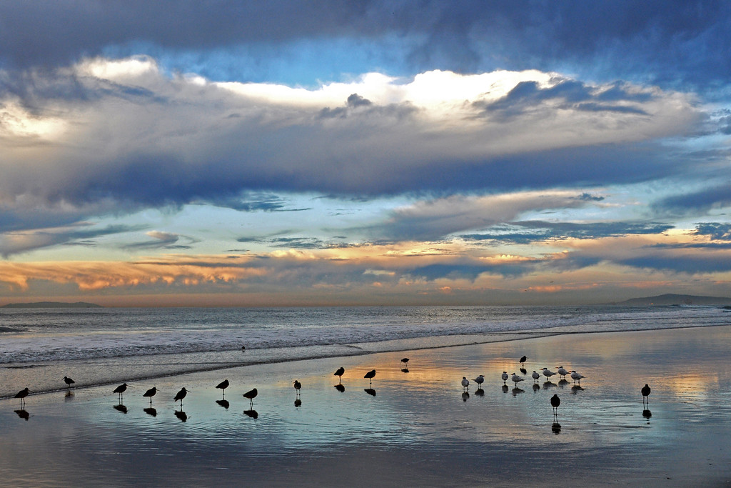 Shorebirds appear as music notes ... Nature playing our song...