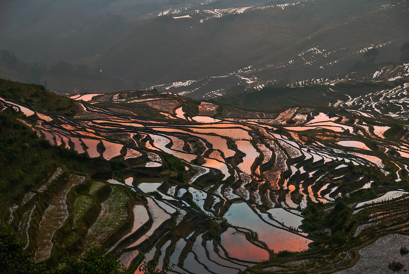 Rice terraces, Yunnan, China
