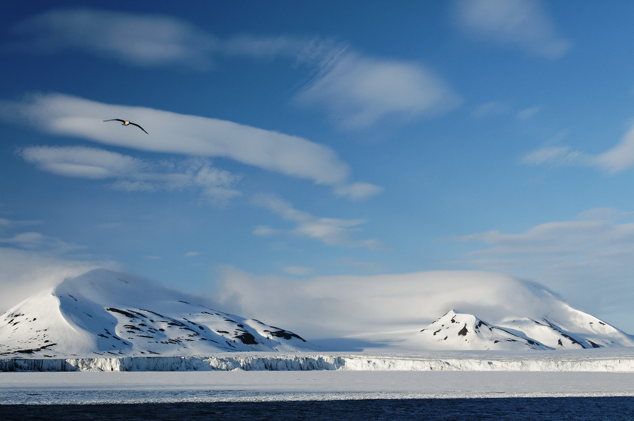 A solitary northern fulmar strategically places on a cloud bank at Hornsund, Svalbard.