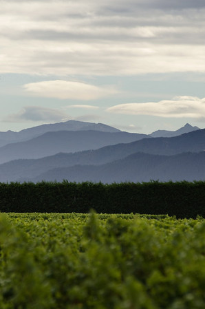 The hills that inspired the Cloudy Bay wine label - Marlborough, April 2012