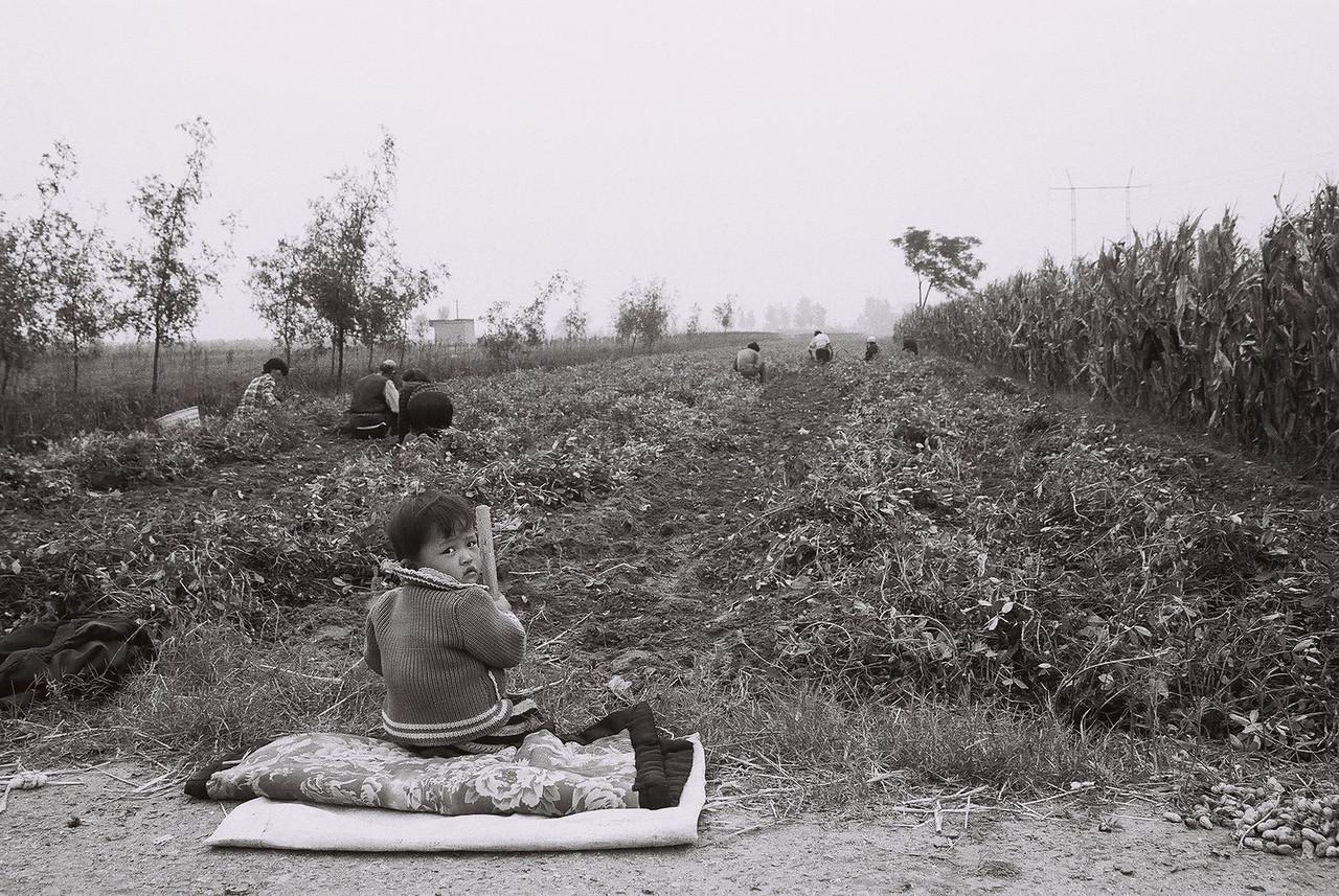 china -boy watching peanut picking