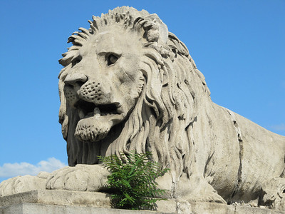 The lion on Szechenyi Chain Bridge.Nice that he has some grass to munch on if he gets hungry. Budapest.